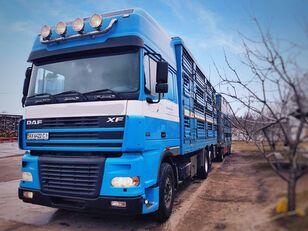 PEZZAIOLI camión para transporte de ganado + remolque para transporte de ganado